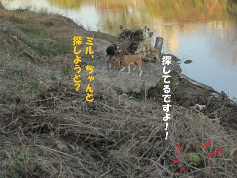 084_20101127222602.jpg