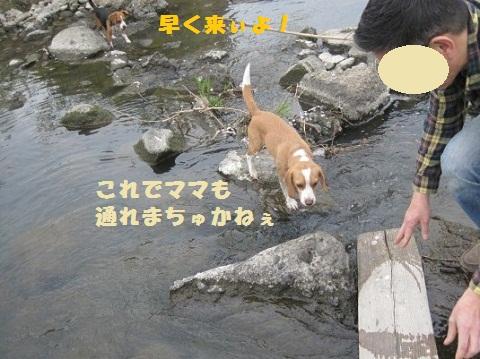 088_20110410073352.jpg