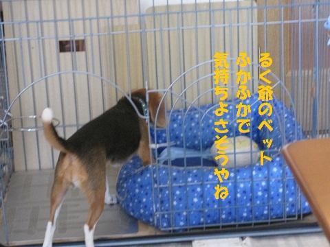 101_20100809215706.jpg
