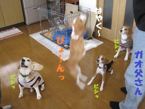 159_20101016081543.jpg