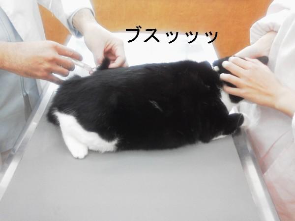 2013ワクチン (6)