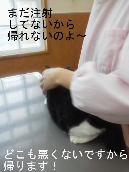 2013ワクチン (4)