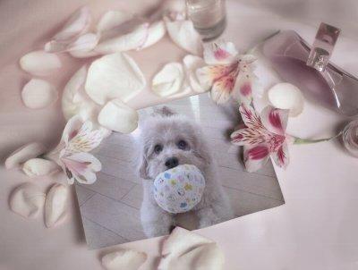 PhotoFunia-5c03b.jpg