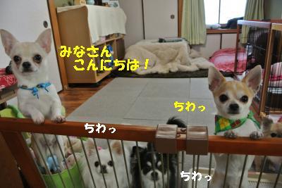 20130111+018_convert_20140113151859.jpg