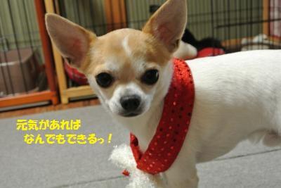 DSC_1701_convert_20131224102239.jpg