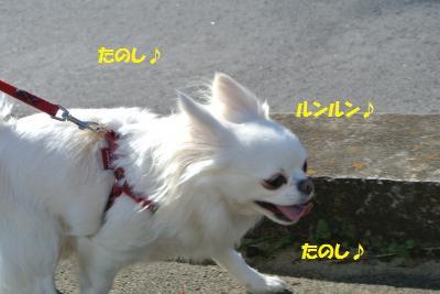 DSC_1754_convert_20131227103447.jpg