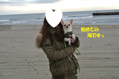 DSC_2033_convert_20140107091651.jpg