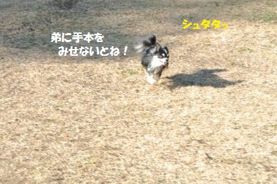 DSC_2054_convert_20140107091839.jpg