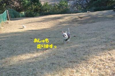 DSC_2068_convert_20140107091923.jpg