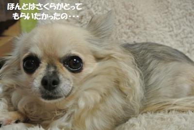 DSC_2167_convert_20140109102416.jpg