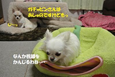 DSC_2256_convert_20140115113040.jpg