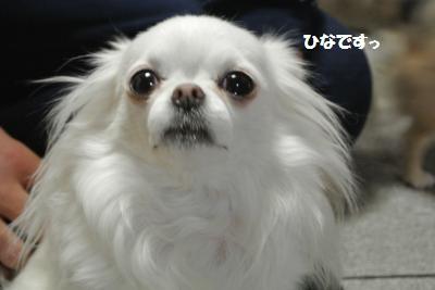 DSC_2282_convert_20140117113945.jpg