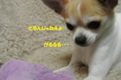 DSC_2358_convert_20140120101132.jpg