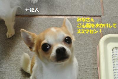 DSC_2411_convert_20140121110843.jpg