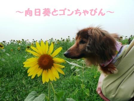 お花のニホイがします♪