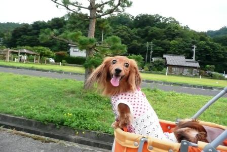 Go Go デシ♪