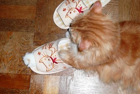 スリッパを履いた猫