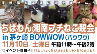 chigasakineko1_320x180.jpg