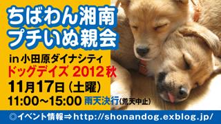 dogdays3_320x180.jpg