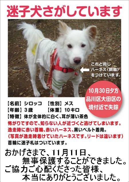 shirocco_convert_20111030233347.jpg