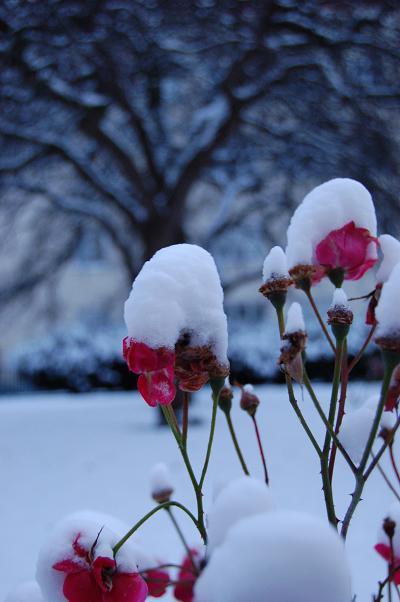 snow-hats