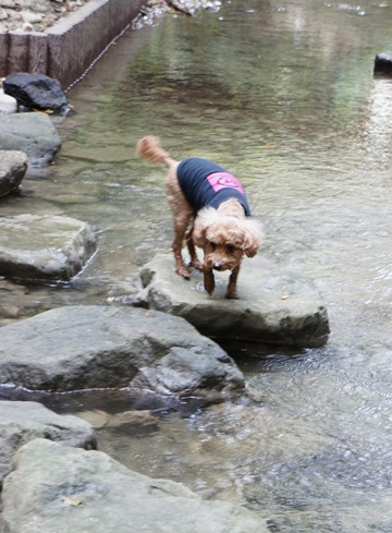 水はちょっと怖い