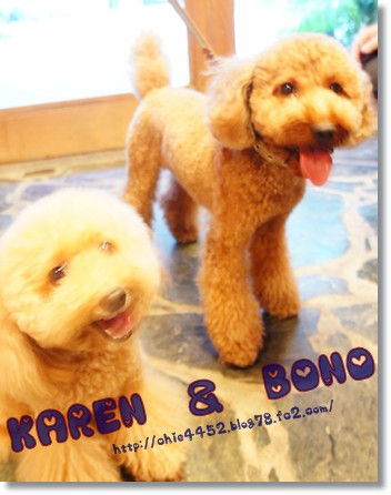 カレン&ボノ カップル
