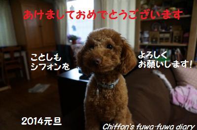 DSC01049_convert_20140101164245.jpg