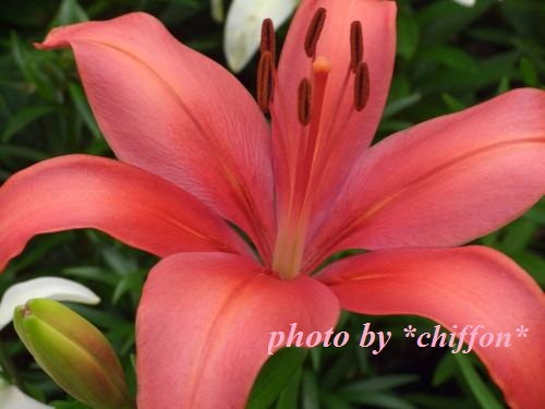 CIMG4135_convert_20120629203534.jpg
