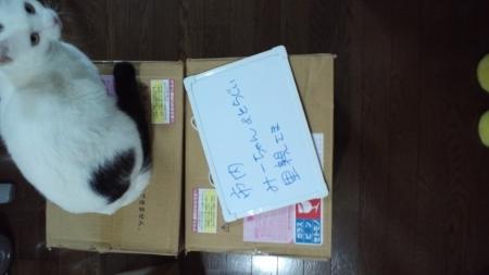 PAP_0051_20131231195854b8e.jpg
