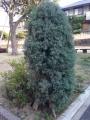 ネコションの木
