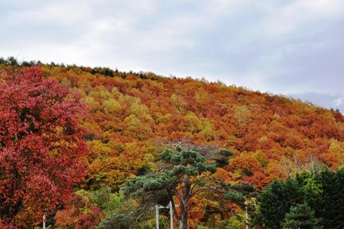 東川町の紅葉♪