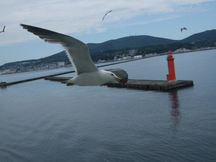 2011北海道 1047