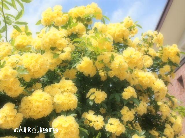 002_20120516215305.jpg