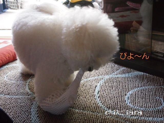 022_20120329215227.jpg