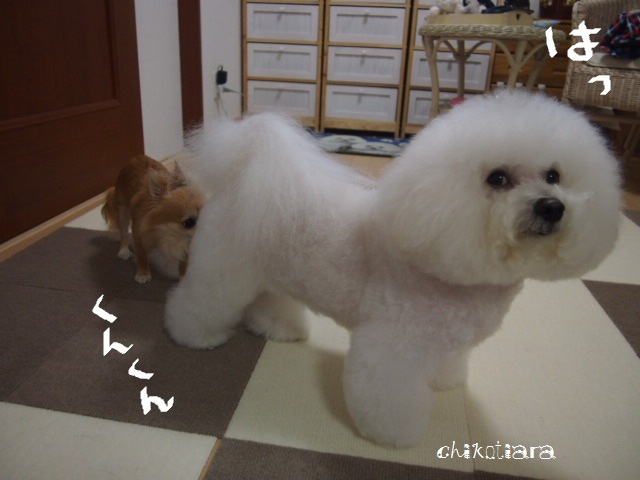 022_20120802215627.jpg