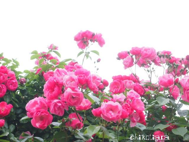 030_20120605221449.jpg