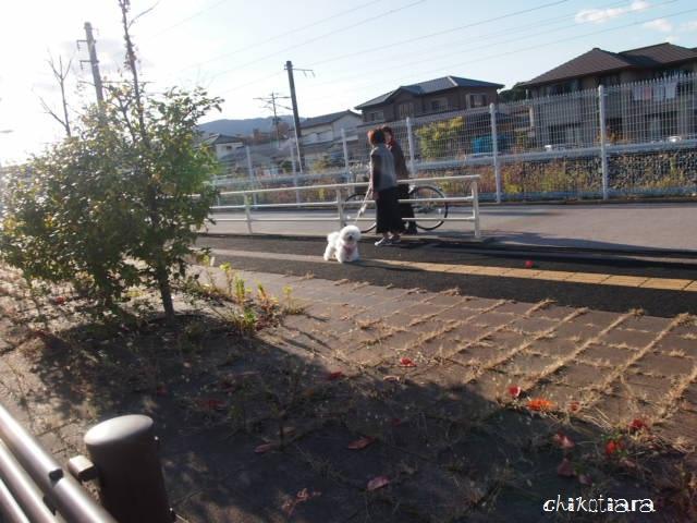036_20121117212940.jpg