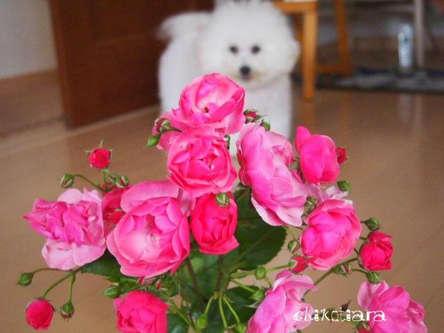 038_20120605221448.jpg