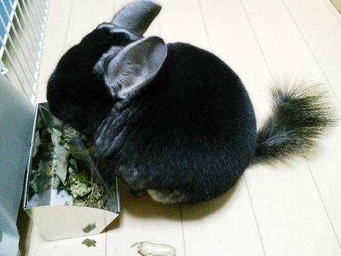 加奈ちゃん、落花生を食べ・・・ない