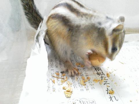 輝☆殻付きアーモンドを食べる