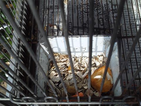 シマリスのエサ・・・の残骸