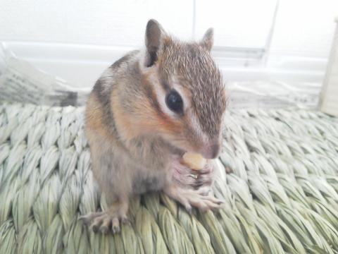 輝☆バナナを食べる