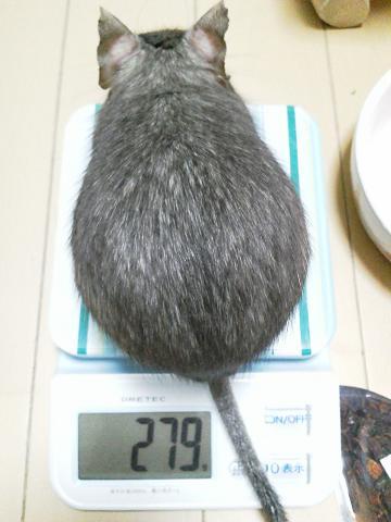 ティノくんの体重測定20120428
