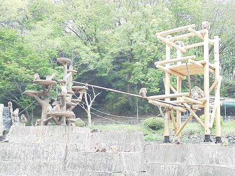 多摩動物公園 ニホンザル
