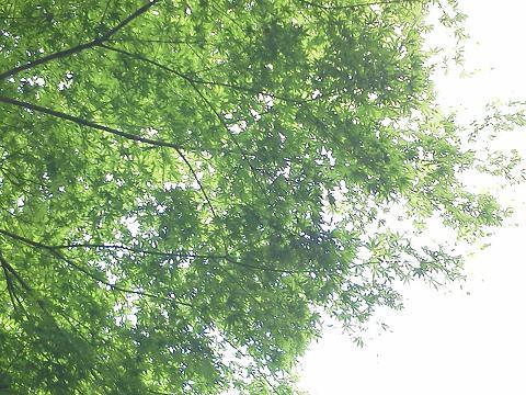 多摩動物公園 楓