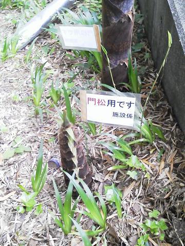 多摩動物公園 ~竹林~