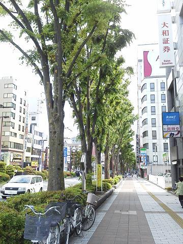 甲府駅前 街路樹