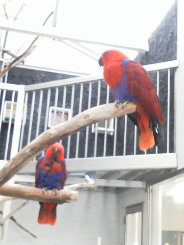 とり村 2階 鳥たちの中庭