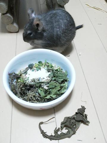 ティノくんのお食事メニュー